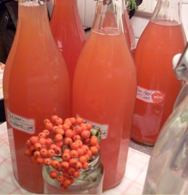 Vogelbeer - Marillensirup Rezept