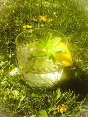 Maibowle (Waldmeister) Rezept